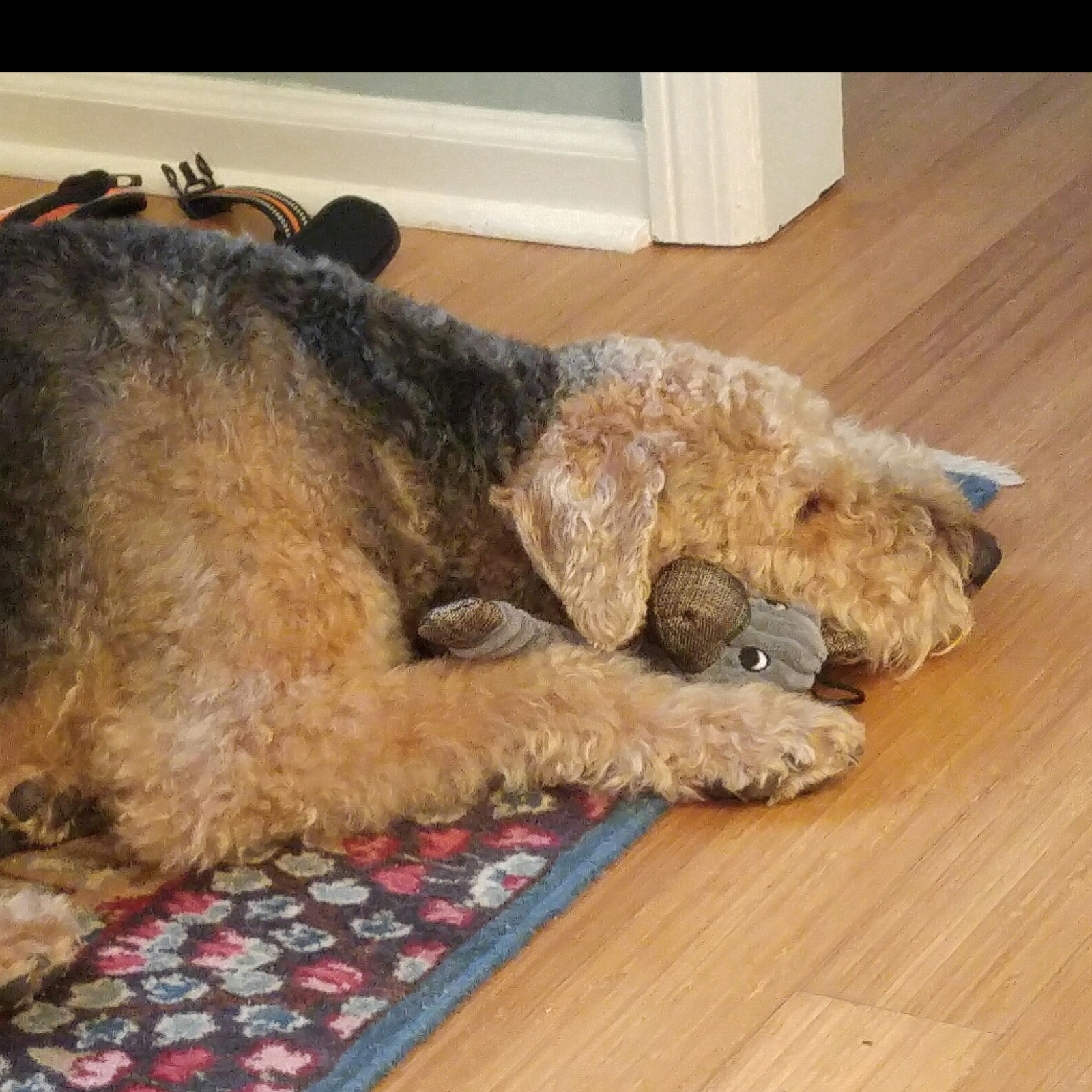 ATRA Airedale Terrier Rescue & Adoption
