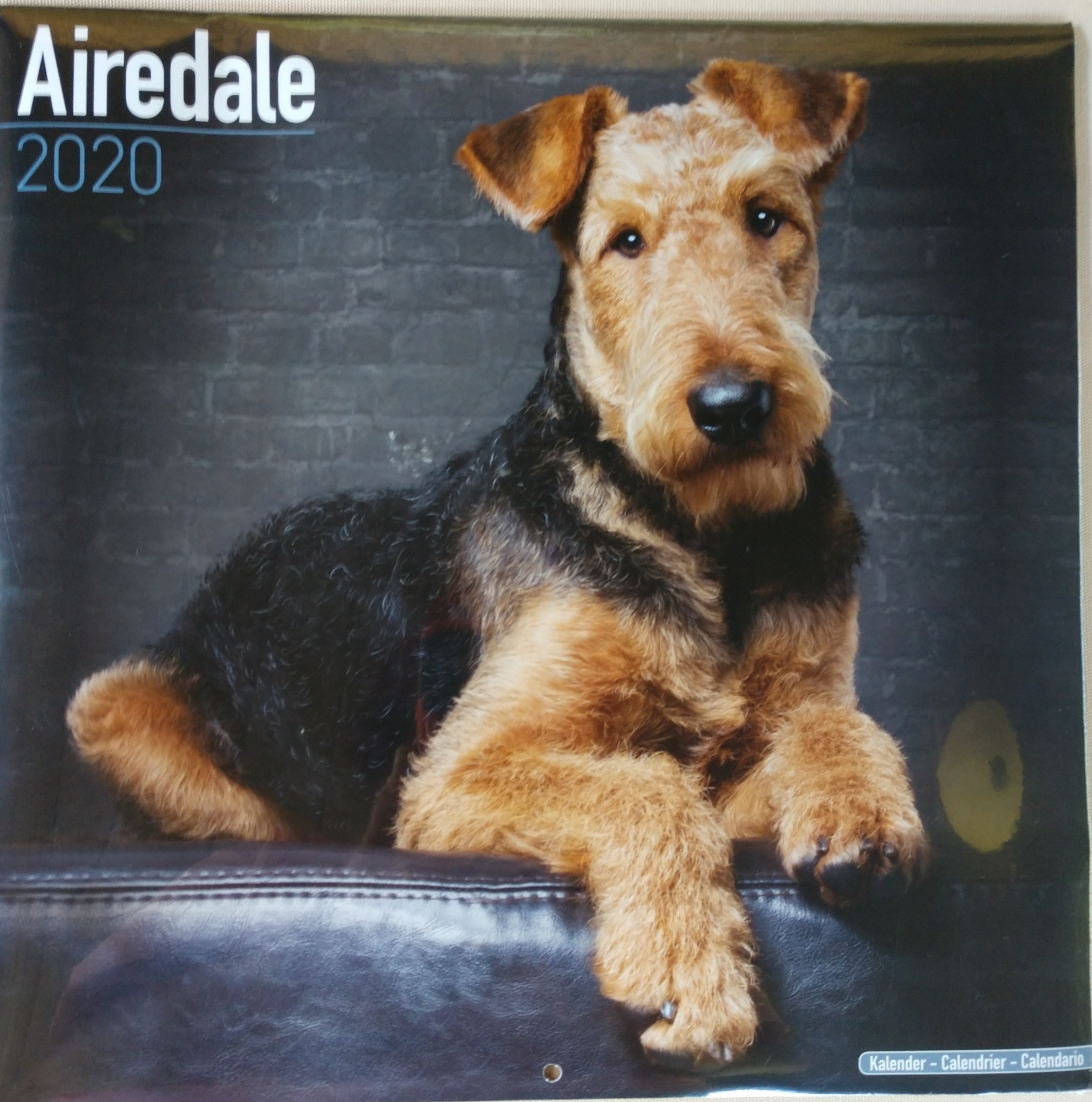 Calendario Estate 2020.Atra Airedale Terrier Rescue Adoption Finding Loving