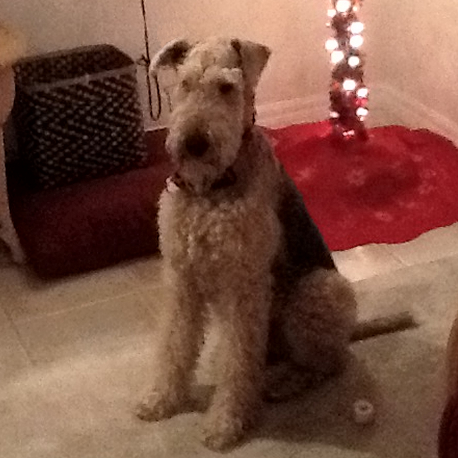 ATRA - Airedale Terrier Rescue & Adoption | Finding loving ...