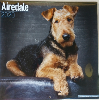 ATRA - Airedale Terrier Rescue & Adoption | Finding loving